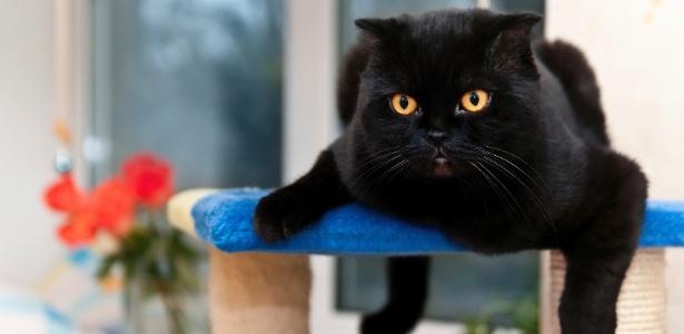 gato-em-cima-de-um-arranhador-1430849797010_615x300 Mudança de lar sem estresse: veja como adaptar cães e gatos à nova casa