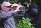 Gorilas selvagens geram turismo e dinheiro em Ruanda - Reprodução/vídeo/BBC