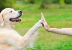 Sob a ótica de cães e gatos: você sabe como seu bicho enxerga o mundo? (Foto: Getty Images)