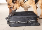 Cães treinados para encontrar droga só conseguem achar comida em aeroporto (Foto: Getty Images)