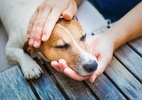 Parasitas em cães e gatos: como prevenir, identificar e cuidar (Foto: Getty Images)