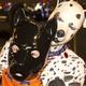 O curioso universo dos homens que vivem como cães - Puppy Pride