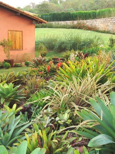 Uma grande variedade de espécies de bromélias (Bromeliaceae