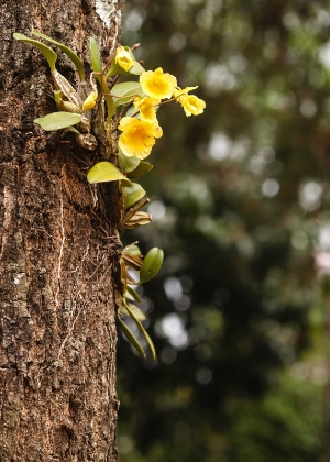 Orquideas no tronco