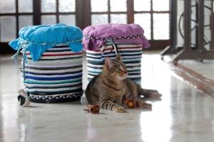 Faça um arranhador para gatos com materiais baratos e reutilizados - Reinaldo Canato/ UOL