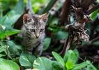 Crie um jardim sensorial e faça seu gato mais feliz (Foto: Getty Images)