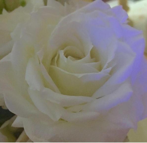 Ana Hickmann posta foto de rosa branca em seu perfil do Instagram