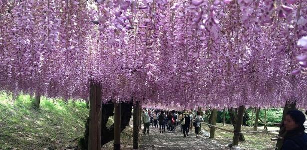 plantas jardim japones: primavera do Japão, parque ganha túneis de flores; conheça o local