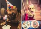 Cachorros comemoram aniversário com muita fofura na hora do parabéns (Foto: Instagram/ Montagem UOL )
