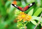 Panamá tem natureza exuberante e muita biodiversidade - Divulgação