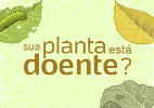 Descubra por que suas plantas estão infelizes - Arte/UOL