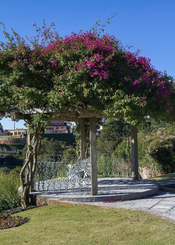 Em Campos do Jordão (SP), o pergolado em madeira tratada foi colocado em um espaço para a observação da paisagem, no projeto do paisagista Jair Pinheiro. A planta ornamental escolhida para enfeitar a cobertura foi a primavera (Bougainvillea)
