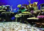 Viagem ao fundo do mar: o Rio inaugura o maior aquário da América do Sul - AquaRio/Facebook