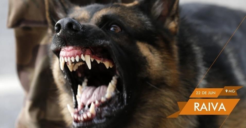 RAIVA - Cachorro da polícia late para manifestantes durante protesto em Belo Horizonte antes da partida entre Japão e México no Mineirão