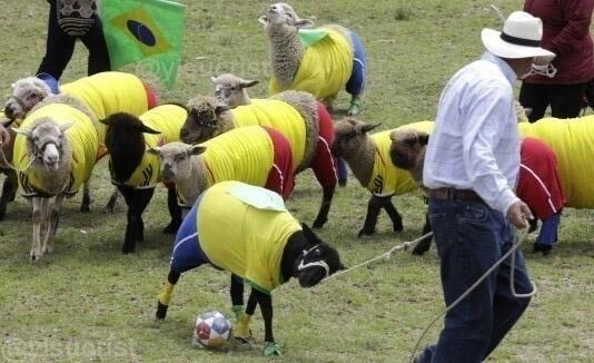 Imagens do treino da seleção brasileira após o vexame