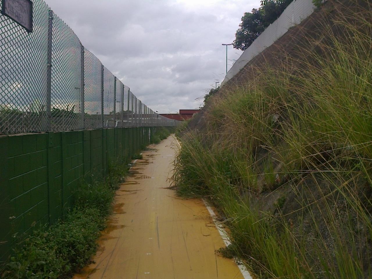Vegetação invade a pista em alguns trechos