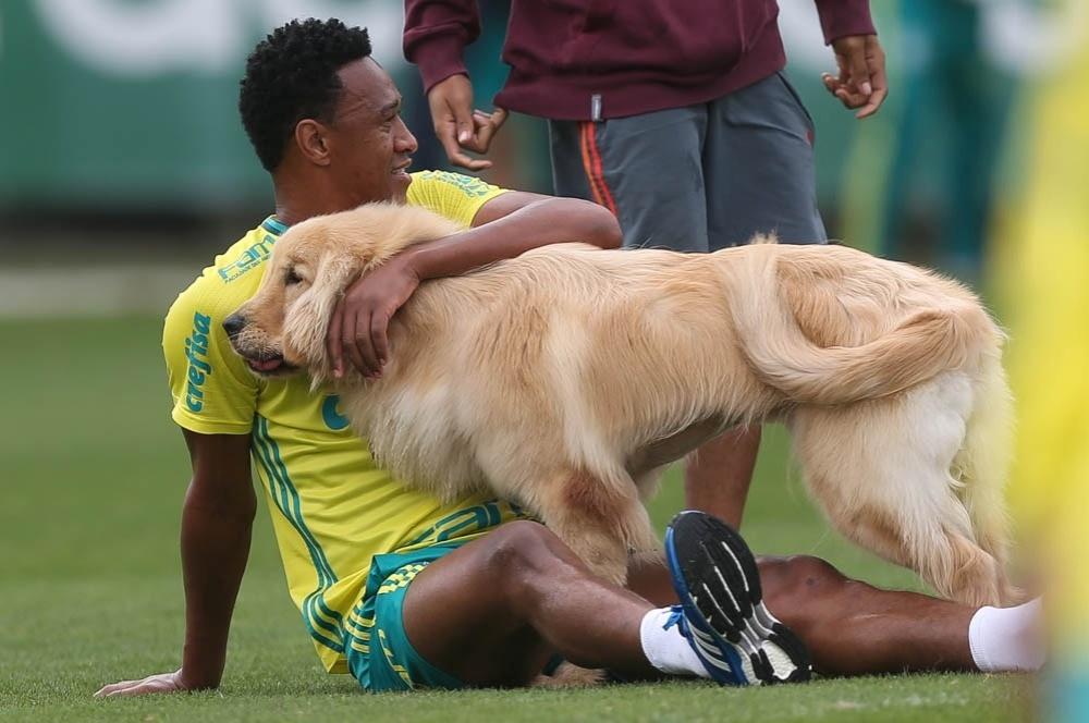 Fabrício cachorro Palmeiras