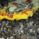 Corinthians reluta, mas descarta tema da vitória de Senna na Arena