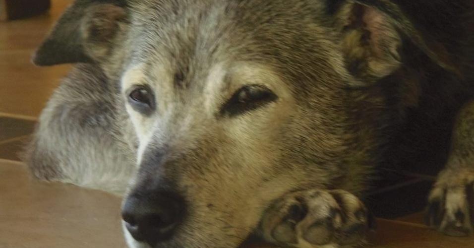 Biriba foi um dos cachorros que Carlos Eduardo adotou após tirar das ruas