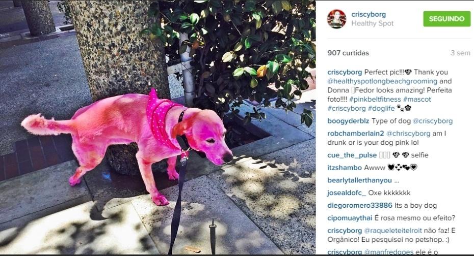 Cris Cyborg tem um cão rosa chamado Fedor