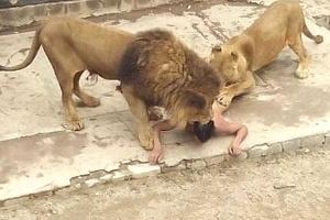 Reprodução/Animallibre.org