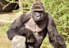 Cincinnati Zoo/Reuters
