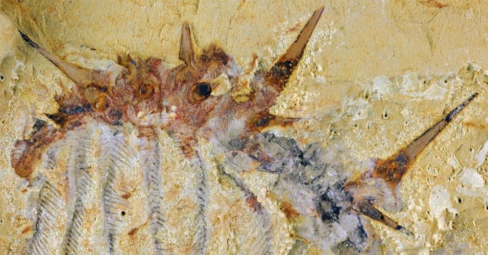 29.jun.2015 - MONSTRO DE 30 DE PATAS - Uma equipe internacional de pesquisadores identificou uma nova espécie de verme que viveu no sul da China há cerca de 515 milhões de anos, durante o período Cambriano. O animal é o Collinsium ciliosum e tem 72 espinhas individuais e 15 pares de patas. O fóssil foi encontrado em um depósito de Xiaoshiba, no Sul da China, e a descoberta foi divulgada pelos cientistas nesta segunda-feira (29)