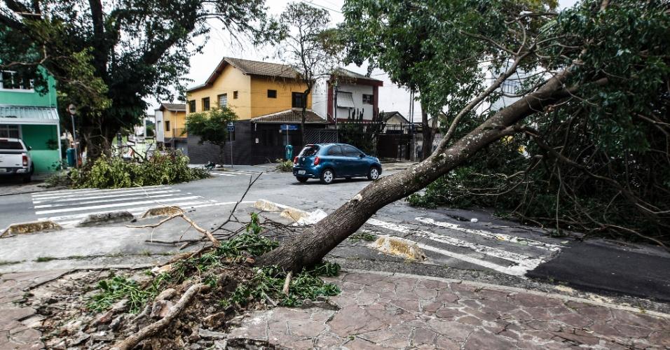 21.out.2016 - Forte chuva faz árvore entortar e levanta cimento da calçada na rua Frasisco Mainardi, Lapa, zona oeste da cidade de São Paulo