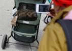 Em NY, até a tartaruga ganha passeio em carrinho de bebê (Foto: Shannon Stapleton/Reuters)