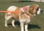 Cadela roubada no Colorado é encontrada 5 anos depois a 1.400 km de distância (Foto: Reprodução/KMOV TV)