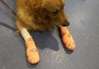 Um cão morre e outro se fere gravemente após voos em companhia australiana (Foto: Reprodução/Facebook/Arjun Sivadasan)