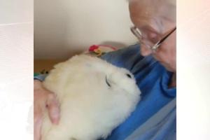 Foca robô promete ajudar idosos com demência no Reino Unido (Foto: reprodução)