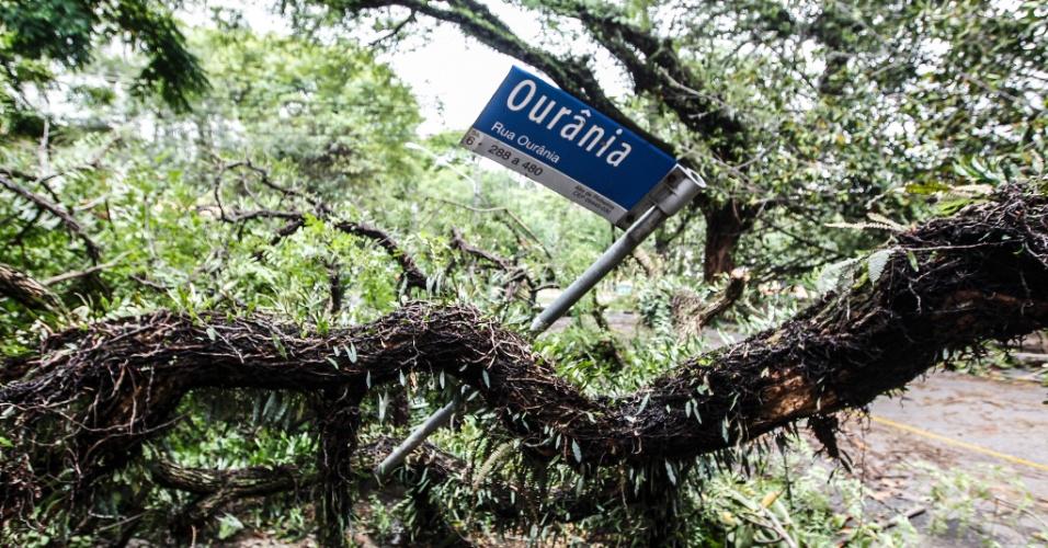 21.out.2016 - A placa da rua Ourânia, em São Paulo, foi derrubada quando uma árvore caiu em cima dela durante a forte chuva nesta quinta-feira (20)