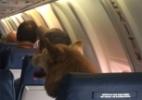 Apertem os cintos, tem um cachorrão na saída de emergência! (Foto: Reprodução/Twitter/NickWeathers14)