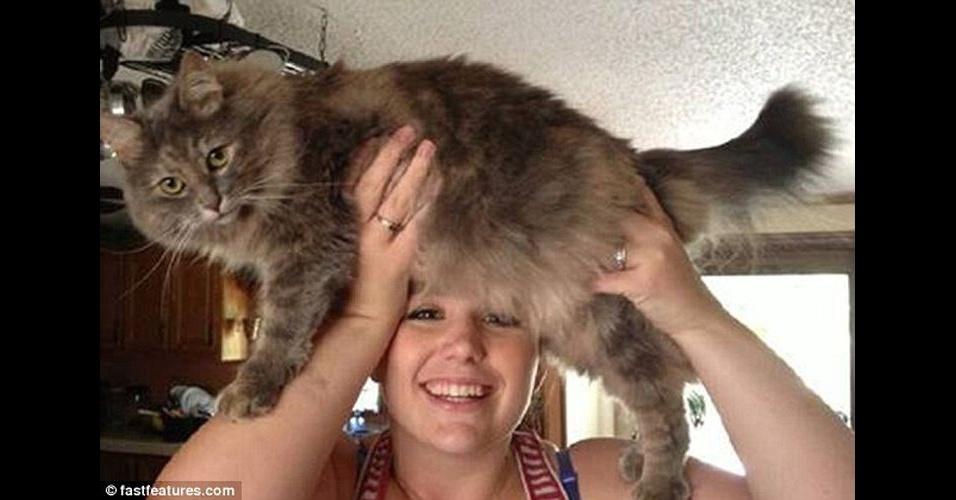 Depois da modinha de usar os gatos como se fossem barba, os bichanos foram 'transformados' em perucas pelos internautas