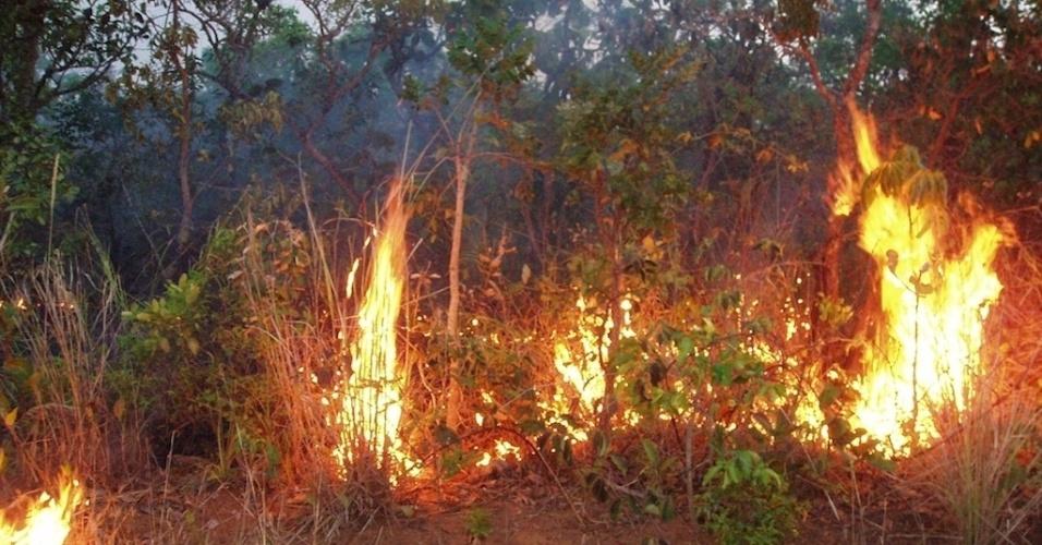 """10.jun.2013 - Incêndios na vegetação rasteira - e que ficam """"escondidos"""" dos satélites pela copas das árvores - queimaram mais de 85 mil km2 da Amazônia entre 1999 e 2010, mostra estudo de Doug Morton, cientista da Nasa (Agência Espacial Norte-Americana)"""