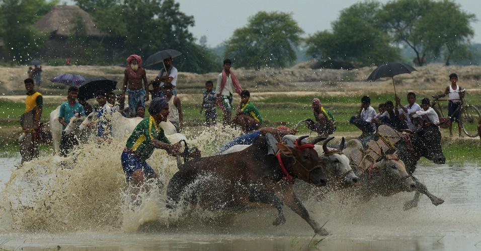 20.jun.2013 - Fazendeiros indianos participam nesta quinta-feira (20) de corrida de touros no vilarejo de Altekhali, a 110 quilômetros ao sul de Calcutá, na Índia. Mais de cem touros devem correr nos dois dias do evento, que é considerado uma tradição da cultura indiana. Os fazendeiros dizem que arar seus campos depois da corrida traz chuva e uma colheita melhor