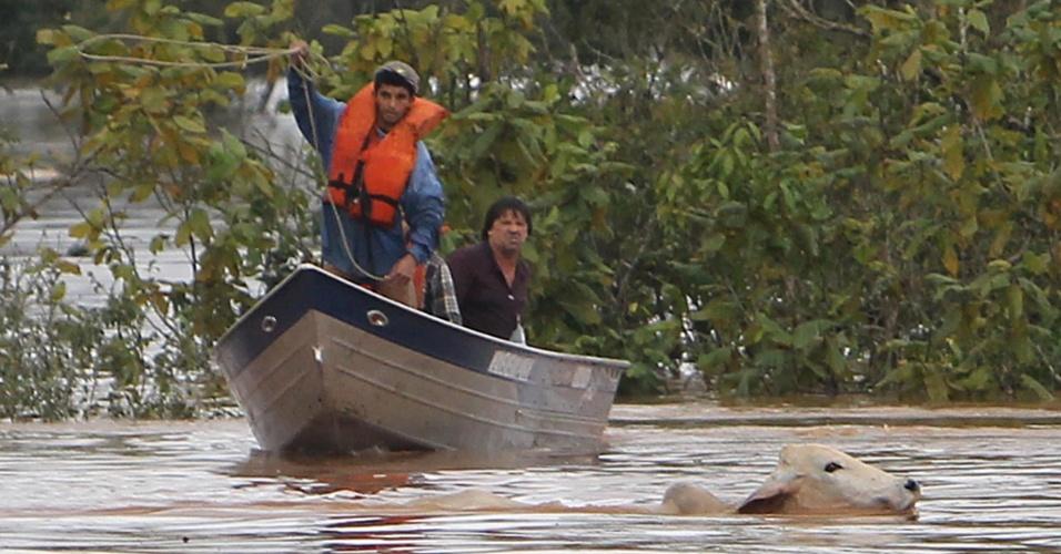 28.jun.2013 - Animais são resgatados no município de Japirá (PR), após chuvas intensas que inundaram diversas cidades paranaenses. O governador, Beto Richa, assinou na manhã desta sexta-feira (28), em Maringá, um decreto que estabelece situação de emergência em 59 municípios paranaenses mais atingidos pelas chuvas