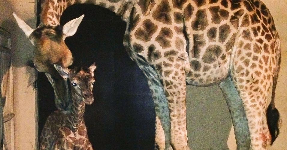 22.jul.2013 - A mamãe girafa Mel deu à luz o seu segundo filhotinho, nascido no Zoológico de São Paulo, em Água Funda, na zona sul da capital paulista. O bebê girafa é o 24º a nascer no local, que tem tradição na reprodução da espécie. O primeiro nascimento no zoológico foi registrado em 1977