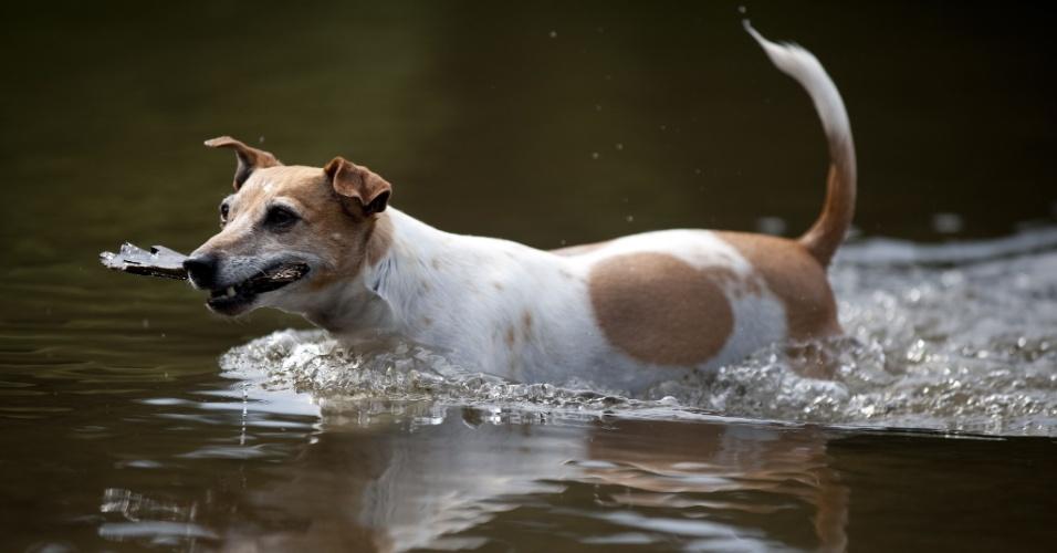 24.jul.2013 - Cachorro se refresca em um lago, nesta quarta-feira (24), em Clausthal-Zellerfeld, Alemanha