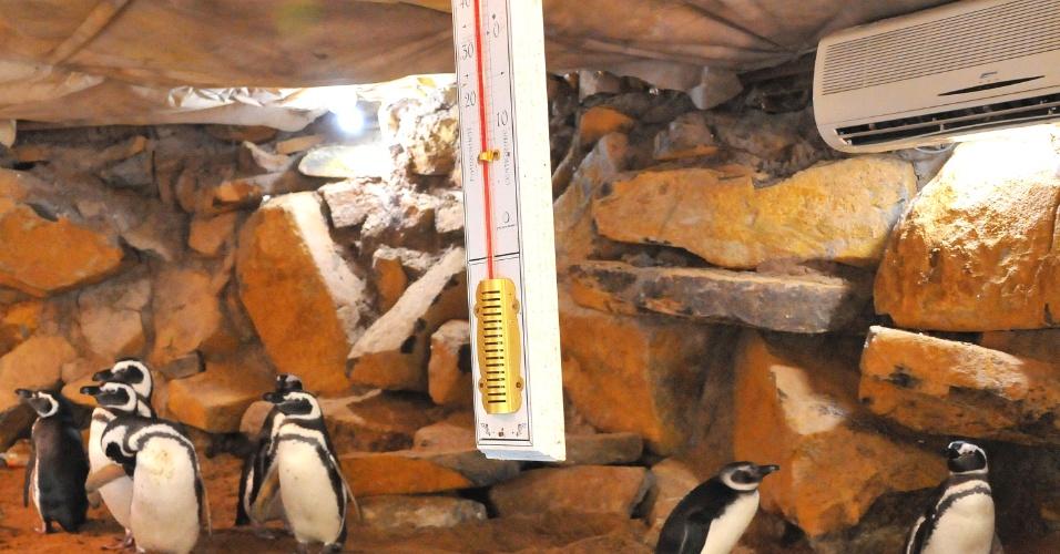 """24.jul.2013 - Em função das baixas temperaturas no Sul do país até o recinto dos pinguins-de-magalhães, no Gramadozoo, em Gramado, recebeu aquecimento nesta quarta-feira (24). O veterinário Renan Stadler, responsável técnico pelo parque, explica que o pinguim-de-magalhães não vive no frio extremo. """"Tem muita gente que pensa que pinguim gosta do frio, mas não é o caso dessa espécie, que são animais que viajam para a costa brasileira em busca de correntes marítimas mais quentes e de alimento"""", explica"""