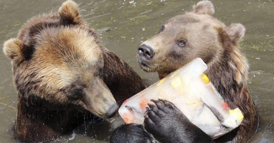 24.jul.2013 - Ursos pardos se refrescam com bloco de gelo e peixes congelados, nesta quarta-feira (24), no zoológico de Hamburgo (Alemanha)