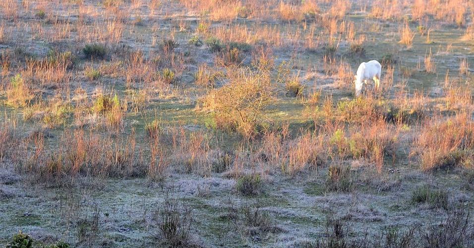 26.jul.2013 - Santa Maria, cidade na região central do Rio Grande do Sul, amanheceu coberta por uma fina camada de gelo e, por volta das 10h, os termômetros marcaram 6,9ºC. Mas a massa de ar polar começa a se afastar começa a se afastar e as temperaturas voltam a subir um pouco ainda hoje, informa o Inmet (Instituto Nacional de Meteorologia), deixando o clima mais agradável para os gaúchos no fim de semana