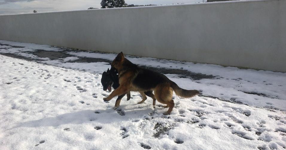 29.jul.2013 - A internauta Joice Gmach Bandeira fotografou seu cachorro brincando no quintal coberto de neve durante a onda de frio que atingiu Papanduva (SC) entre os dias 22 e 23