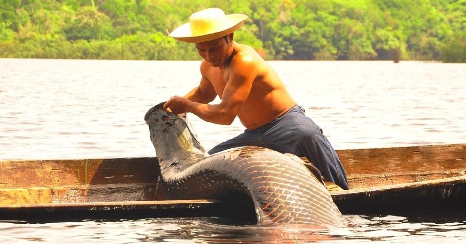 O risco de extinção levou alguns produtores a pensar em uma forma sustentável para manter a cadeia produtiva. É o caso da comunidade ribeirinha da Reserva de Desenvolvimento Sustentável de Mamirauá, no interior amazonense, que promove a pesca apenas de outubro a dezembro
