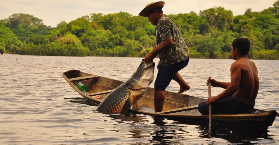 O pirarucu é um dos peixes de água doce mais explorado pela pesca no Brasil. Por conta de seu alto valor comercial (mede 3 metros e chega a 200 kg) está entre as espécies mais suscetíveis à extinção
