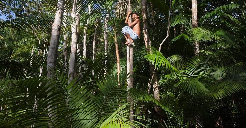 11.ago.2013 - Menino recolhe açaí em área de floresta da cidade de Melgaço (a cerca de 300 km de Belém). Misturado geralmente à farinha, o fruto constitui a base da alimentação das famílias da região