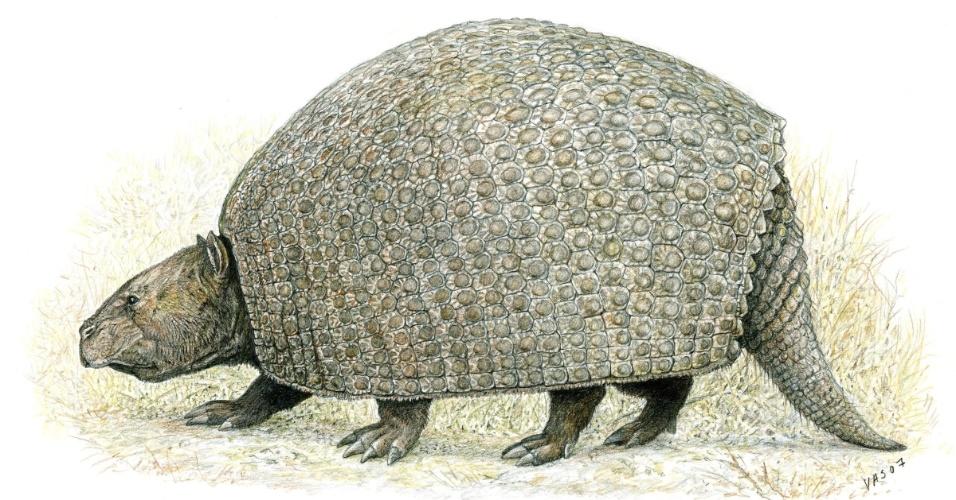"""12.ago.2013 - A megafauna do Pleistoceno ajudou a fertilizar o solo da floresta amazônica, já que estes mamíferos gigantes liberavam nas fezes nitrogênio, fósforo e outros nutrientes que eram consumidos nos vegetais, criando uma espécie de adubo natural. Mas, diante da extinção destes herbívoros gigantes há 12 mil anos, a dispersão de fósforo na bacia amazônica despencou 98%, mostra modelo matemático desenvolvido por grupo das Universidades de Stanford (EUA) e de Oxford (Reino Unido). """"Foi porque a maioria destes animais desapareceu que o mundo tem muito mais regiões pobres em nutrientes"""""""