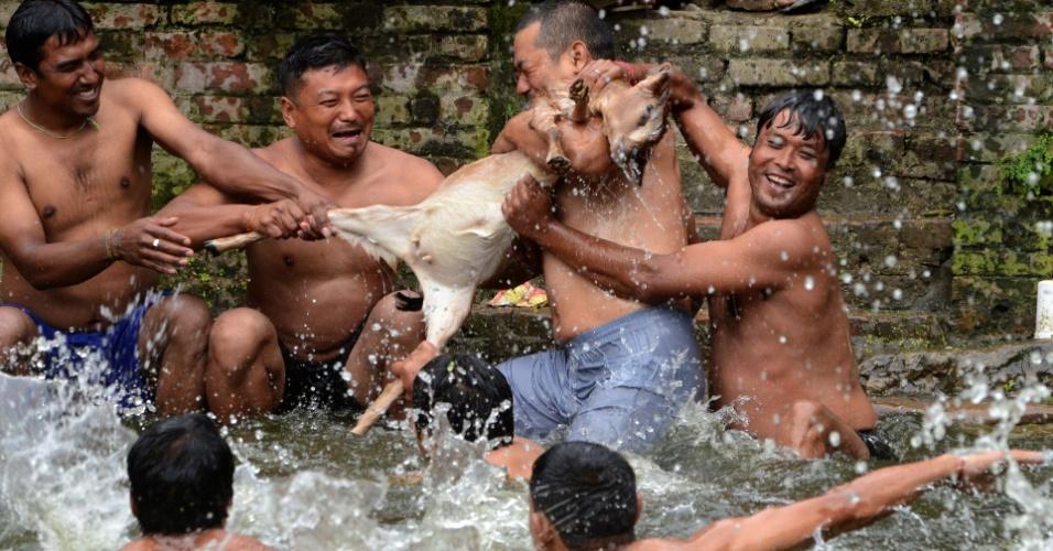 23.ago.13 - Nepaleses atiram filhote de cabra em poço durante festival hindu na vila de Khokana, nas proximidades da capital, Kathmandu. No ritual, o filhote é caçado por grupos de homens que se jogam na água para tentar capturá-lo. Os fiéis acreditam que a prática traz boa sorte