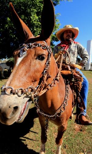 23.ago.2013 - Tropeiros que cavalgaram pouco mais de 100 km, de Pontal ate Barretos, ambas no interior de São Paulo, chegam à Festa do Peão para noite de provas e shows da 58ª edição da festa